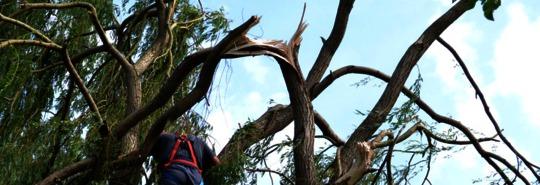 Beseitigung von Sturmschaden an Weide